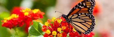 Vlinders bewonderen in de dierentuin