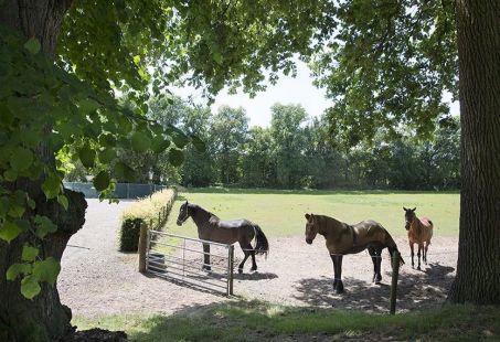 paarden Kasteel