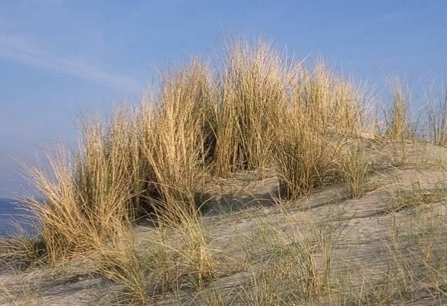 2-daags Oud & Nieuw arrangement in Vlissingen - Inclusief Feestavond