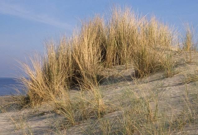 3 Dagen heerlijk Uitwaaien aan het Strand in Egmond aan Zee