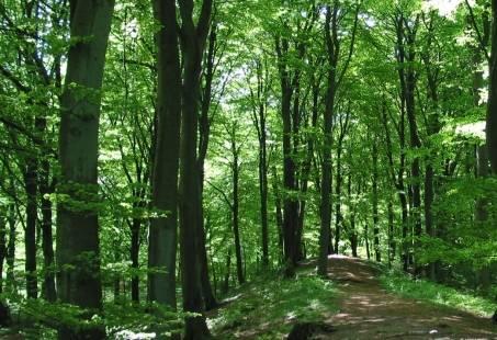 4-uurs Vergaderarrangement in prachtige bosrijke omgeving