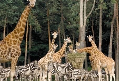 Uitje in Burgers Zoo in Arnhem en beleef de Zoo Experience