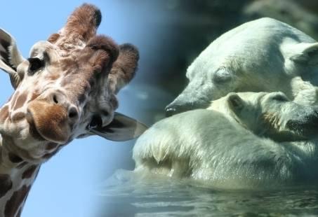 Uit in Dierenpark Amersfoort en beleef de Zoo Experience