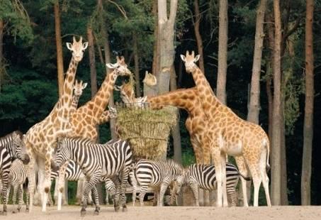 Zoo Experience - Groepsuitje in de dierentuin