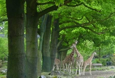 Ga er op uit en ontdek Groningen te Voet met mooie Wandelroutes