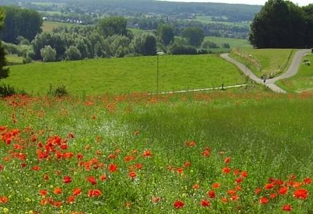 Geniet van een Midweek Wandelen op een 4-sterren landgoed in Zuid-Limburg