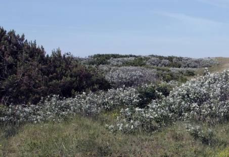 Wandelen op Texel - Heerlijk 3 dagen genieten in De Koog