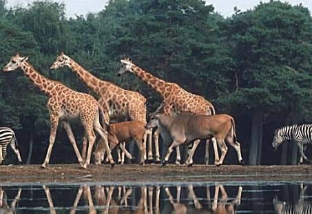 Dierentuin Burgers Zoo