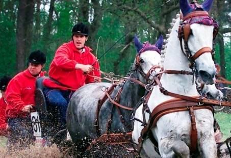 Paardenmennen clinic een bijzondere beleving