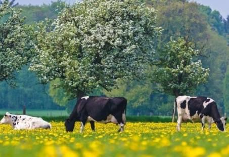 3-Daags lente arrangement in de Achterhoek - Ontdek de natuur