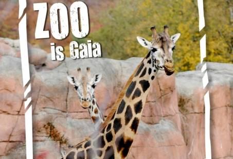 Dagje Gaia Park Zoo bezoeken