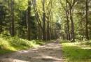 2 Dagen Wandelen door de bossen van de Utrechtse Heuvelrug en verblijf in Soesterberg