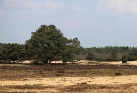 4-daagse Wandelvakantie door Drenthe - Wandelen door de prachtige bossen rondom Orvelte