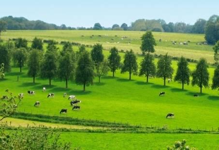 3 Dagen wandelen in en rondom de Zuid-Limburgse toeristenplaats Valkenburg