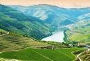 Douro wijnbouw