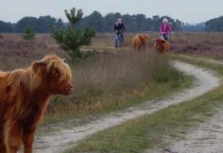 3 daags Fietsarrangement rondom ons landgoed in Brabant