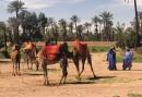 Stoer en Cultureel mannenweekend - 3 daags mannenuitje met bezoek aan de woestijn!