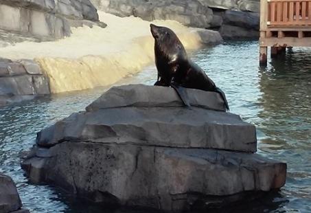 3-daags Familieweekend in Emmen - Inclusief bezoek aan Wildlands Adventure Zoo