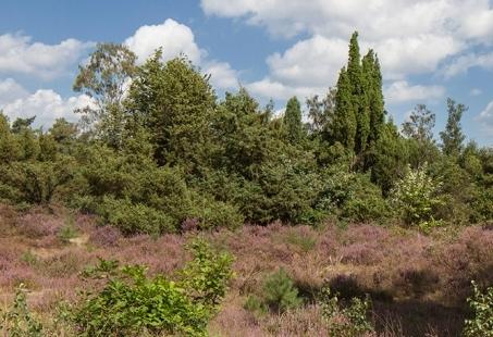 3-daags Fiets en Wandel arrangement in het Overijsselse Rijssen
