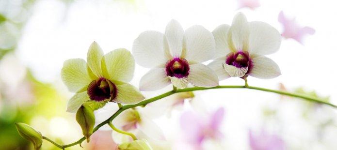 Workshop Bloemsierkunst – Met vriendinnen de bloemetjes buiten zetten