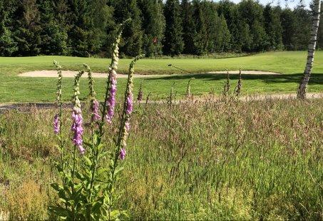 Midweek of Lang Weekend golfen in de Achterhoek - Verblijf in uw eigen vakantiehuisje