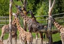 2=1 Burgers Zoo familieweekend aanbieding op de Veluwe