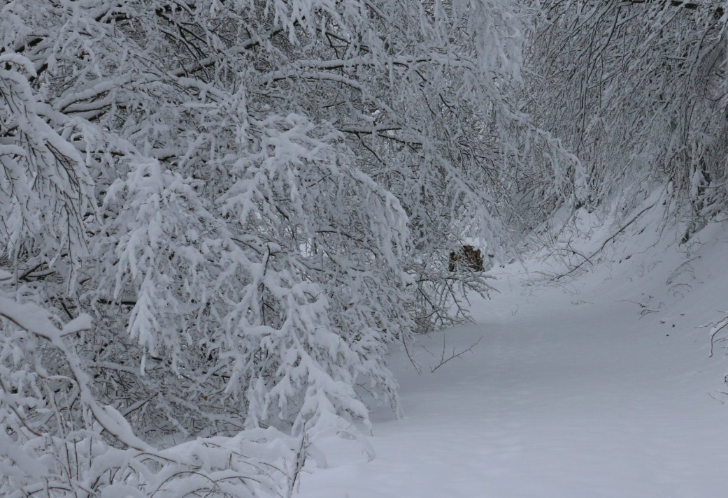 3-daags Kerstarrangement in een sfeervol landhuis in het Duitse Siegen