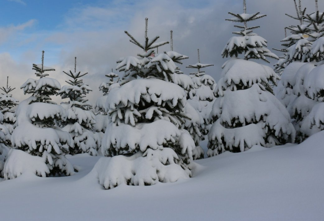 4 Dagen genieten met Kerst in een sfeervol landhuis in het Duitse Siegen