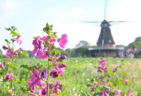 Fiets- en Wandelarrangement in Brabant met een luxe overnachting midden in de natuur