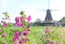 Fietsarrangement in Brabant met een luxe overnachting midden in de natuur