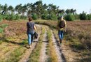 3 daags wandel arrangement - Wandelen en wild spotten op de Veluwe!