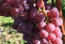 Wijnproeverij op een Wijnboerderij in het Montferland - Gezellig Vriendinnenuitje