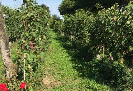 Fietsen door het Montferland en genieten van een Wijnproeverij