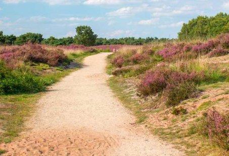 De natuur in met deze 5-daagse Fietsvakantie in Brabant