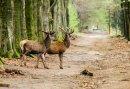 3-daags Wandelarrangement op de Veluwe - vanuit de hotelkamer direct de natuur in