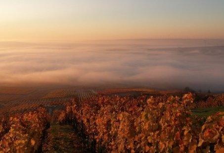 4-daags Wandelarrangement tussen de Wijngaarden en Heuvels van Rheinhessen
