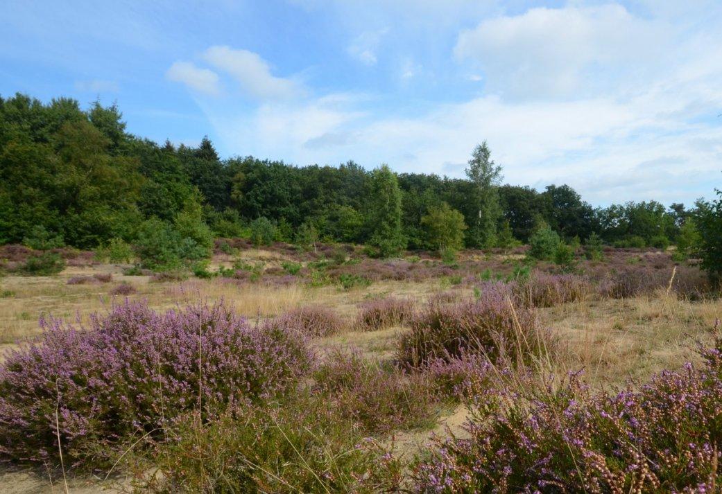 3 dagen Wandelen vanuit uw hotel door Nationaal Park de Drentsche Aa in Drenthe