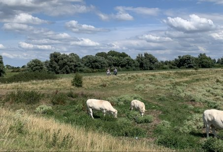 Ontdek het Gelderse Rivierenlandschap en geniet van het Fietsarrangement vanuit Tolkamer