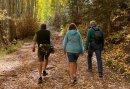 Wandelen in het Montferland - 3 dagen genieten van de natuur