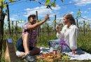 Romantische Picknick in de Wijngaard - genieten in het Montferland