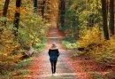 Duik de natuur in van Montferland met dit 3-daags Wandelarrangement vanuit Zeddam